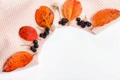 Свитер Woomen нежный бежевый розовый, сухие листья осени и ягоды на белой предпосылке, концепция aronia падения осени стоковые фотографии rf