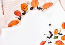 Свитер Woomen нежный бежевый розовый, сухие листья осени и ягоды на белой предпосылке, концепция aronia падения осени стоковые изображения rf