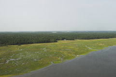 свободный полет Каролины Стоковые Фото