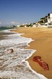 свободный полет Мексика pacific стоковые изображения rf