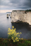 свободный полет dorset Англия красоток harry старая Стоковое Изображение