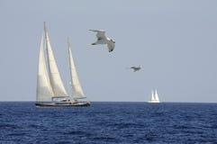 Свобода в ветре Стоковая Фотография RF