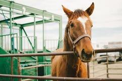 Свобода лошади хотеть Стоковая Фотография