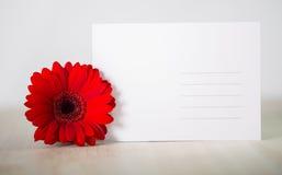 Свободная карточка с совершенным цветком Стоковые Фото
