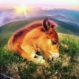 Свободная лошадь Стоковое фото RF