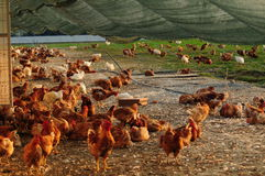 Свободная ферма ряда Стоковые Фотографии RF