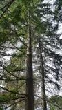 Свободное дерево Стоковые Изображения