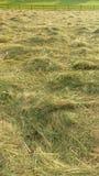 Свободное сено в поле Стоковые Фотографии RF