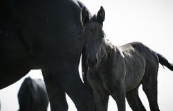 Свободные лошади Стоковые Изображения RF