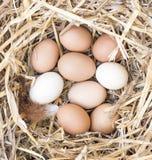 Свободные яичка цыпленка ряда в гнезде Стоковые Изображения