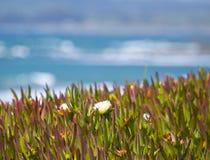свободный полет california Стоковое фото RF