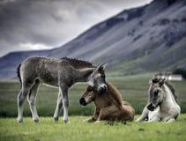 свободный полет Исландия южная Стоковые Фото
