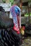 Свободный ряд Турция стоковые фото