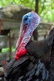 Свободный ряд Турция стоковая фотография