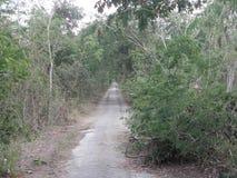 Свод ветви дерева над покинутой дорогой Стоковая Фотография