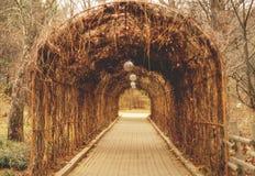 Свод перголы пути, арка, в осени стоковые фотографии rf