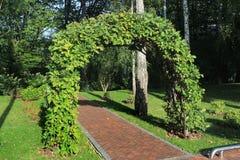 Свод сада сделанный переплетаннсяых ветвей дуба Стоковое Изображение