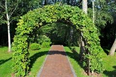 Свод сада сделанный переплетаннсяых ветвей дуба Стоковые Изображения