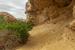 Свод Namibe оазис в пустыне которая обычно заполняет каждые 6 лет в зависимости от дождя anisette вышесказанного Namibe стоковые фото