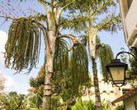 Свойство курорта конематок Sol Рио de луны с экзотическими деревьями и уличными светами стоковая фотография