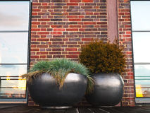 Свойство - плантатор - терраса - сад стоковая фотография