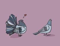 Свой страсть голубя иллюстрация штока