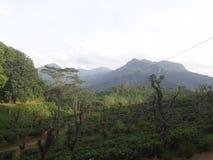 Своя красивая гора и под growings чая стоковые изображения