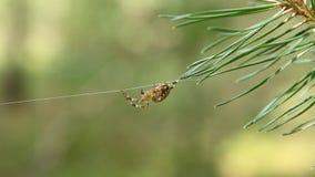 своя сеть паука сток-видео
