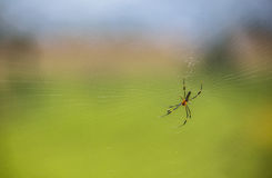 своя сеть паука Стоковые Изображения RF