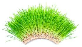 свод зеленой травы Стоковые Изображения RF