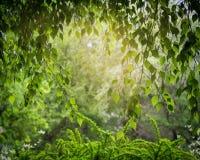 Свод зеленых листьев Стоковая Фотография