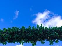 Свод листвы Стоковая Фотография RF