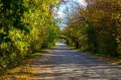 Свод дороги осени старый деревьев, ветвей и листьев Стоковые Фото