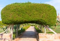 Свод сделанный кустов Стоковая Фотография RF