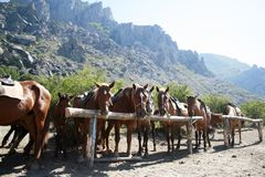 Связанные вверх лошади над предпосылкой гор Стоковое Фото