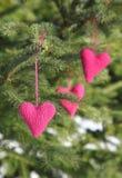 Связанные сердца вися на ветви дерева Стоковое Изображение RF