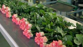 Связанные цветки на транспортере на фабрике цветка сток-видео