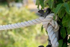Связанный узел веревочки стоковые фото