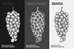 Виноградины руки вычерченные Выгравированный дизайн вектора эскиза бесплатная иллюстрация