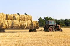 Связка нося сена трактора свертывает - штабелировать их на куче Аграрная машина собирая связки сена на поле Стоковая Фотография RF