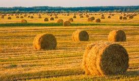 Связка сена в поле под голубым небом Стоковые Фотографии RF