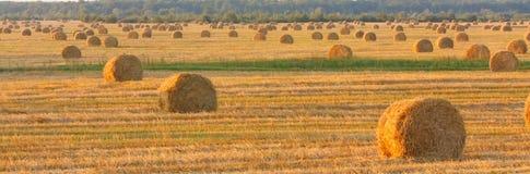 Связка сена в поле под голубым небом Стоковая Фотография RF