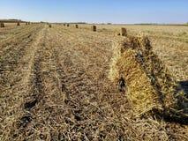 Связка сена в полях стоковое изображение rf