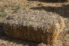 Связка сена в солнечном свете стоковые изображения rf
