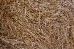 Связка сена как естественная предпосылка Стоковые Фото