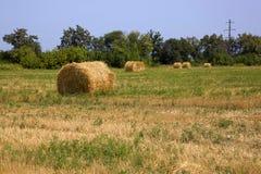 Связка сена на поле Стоковое Фото