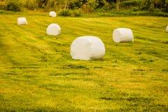 Связка сена обернутая в пластичной фольге, Норвегии Стоковая Фотография