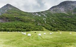Связка сена обернутая в пластичной фольге, Норвегии Стоковое Фото