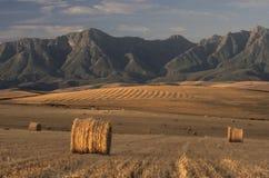 Связки корма на заходе солнца стоковые изображения