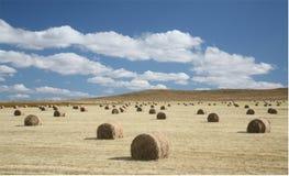 Связки корма на поле сбора стоковая фотография